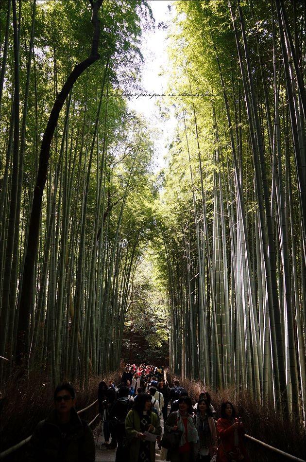 2竹林步道1
