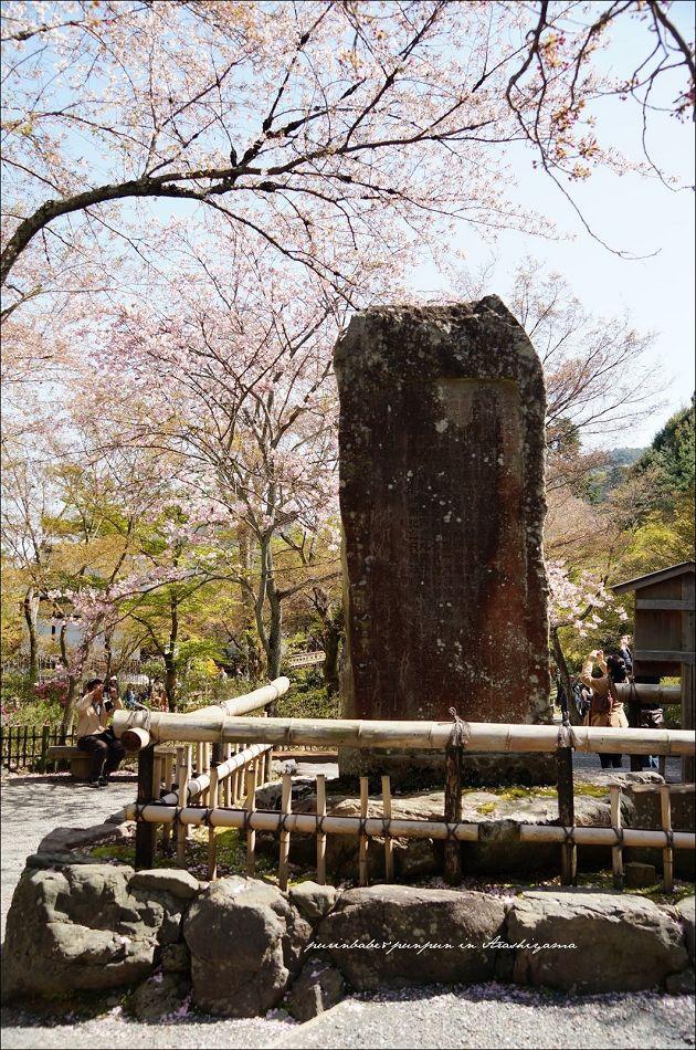 12天龍寺最後的垂櫻