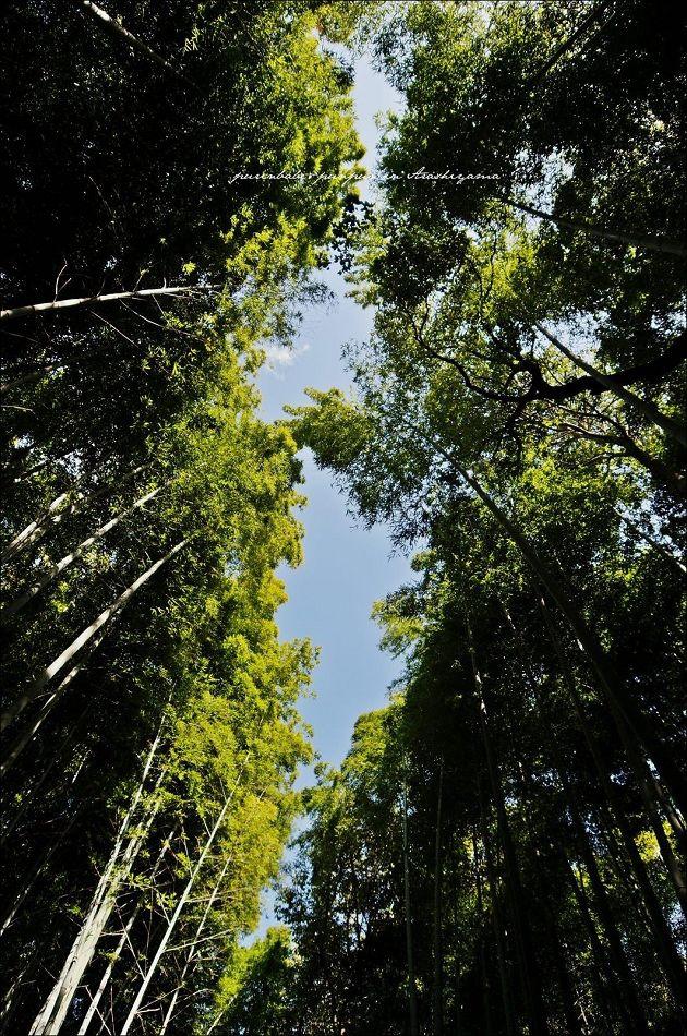 3竹林步道2