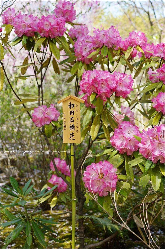 10天龍寺庭園4