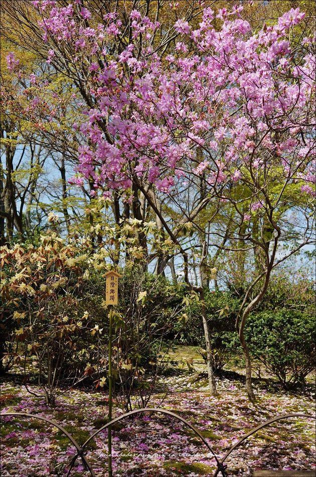7天龍寺庭園1