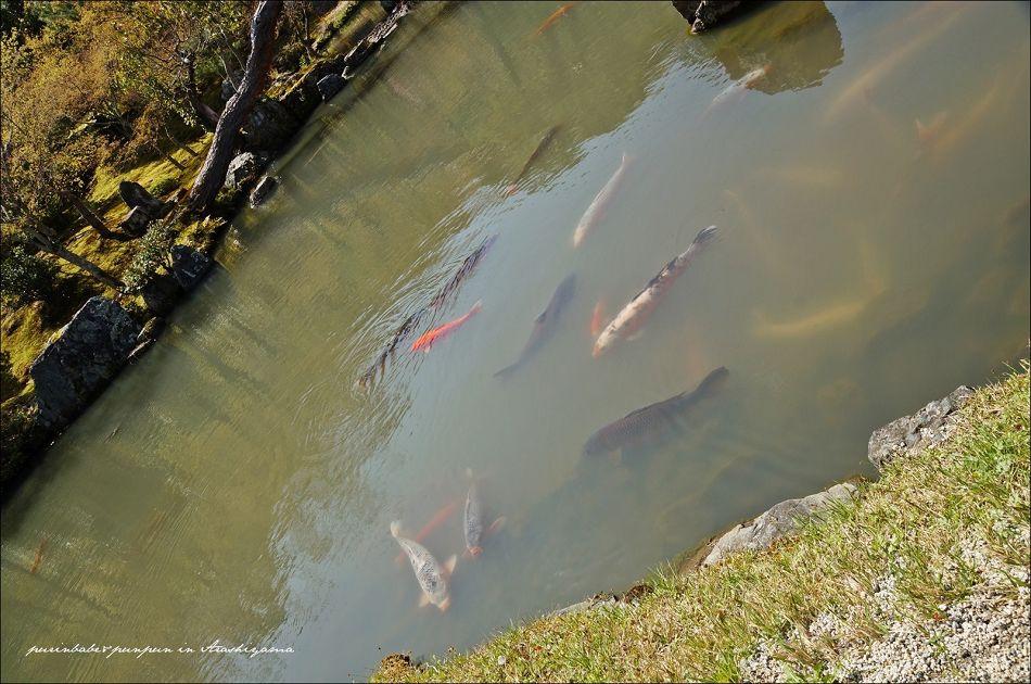 24曹源池大鯉魚