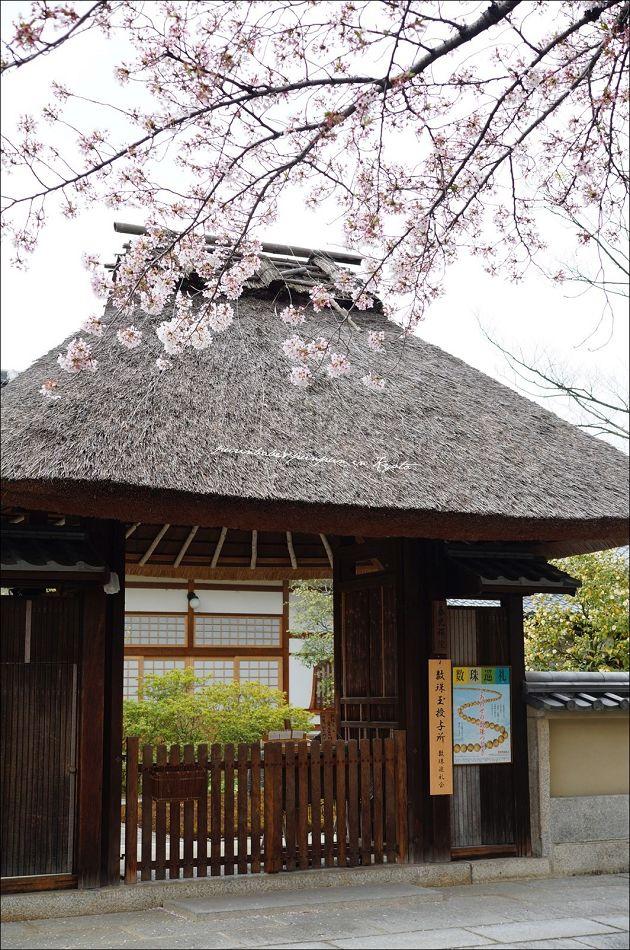 8禪院之櫻