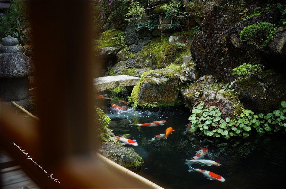 22池中鯉1