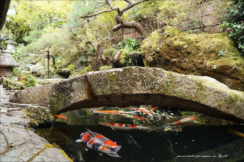 23池中鯉2