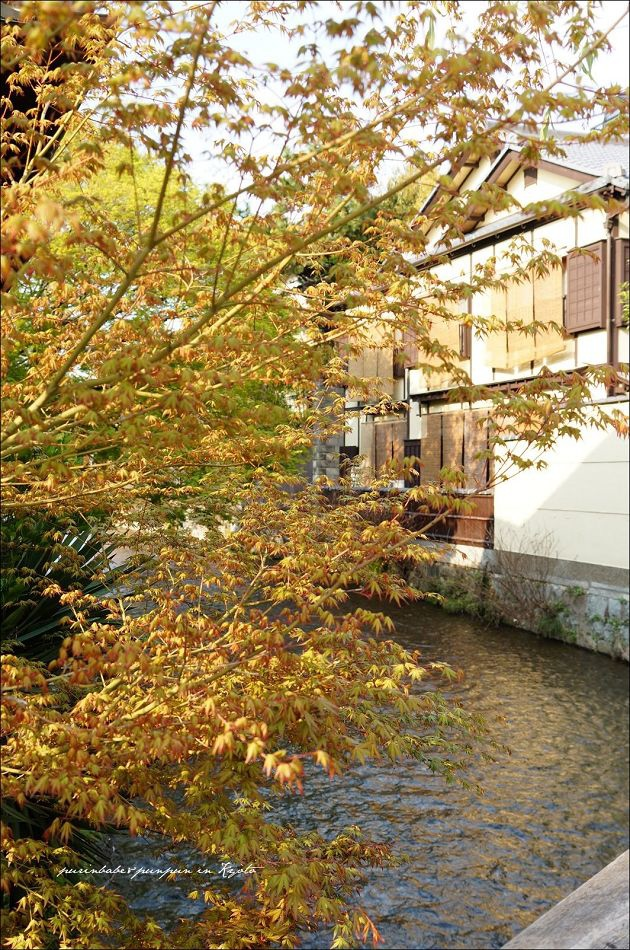 31祇園白川2