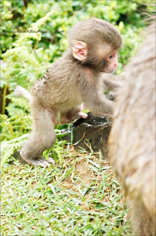 20嵐山猴子公園