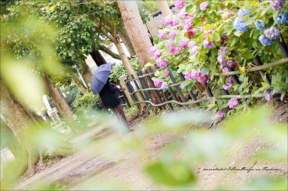 27第一紫陽花苑2