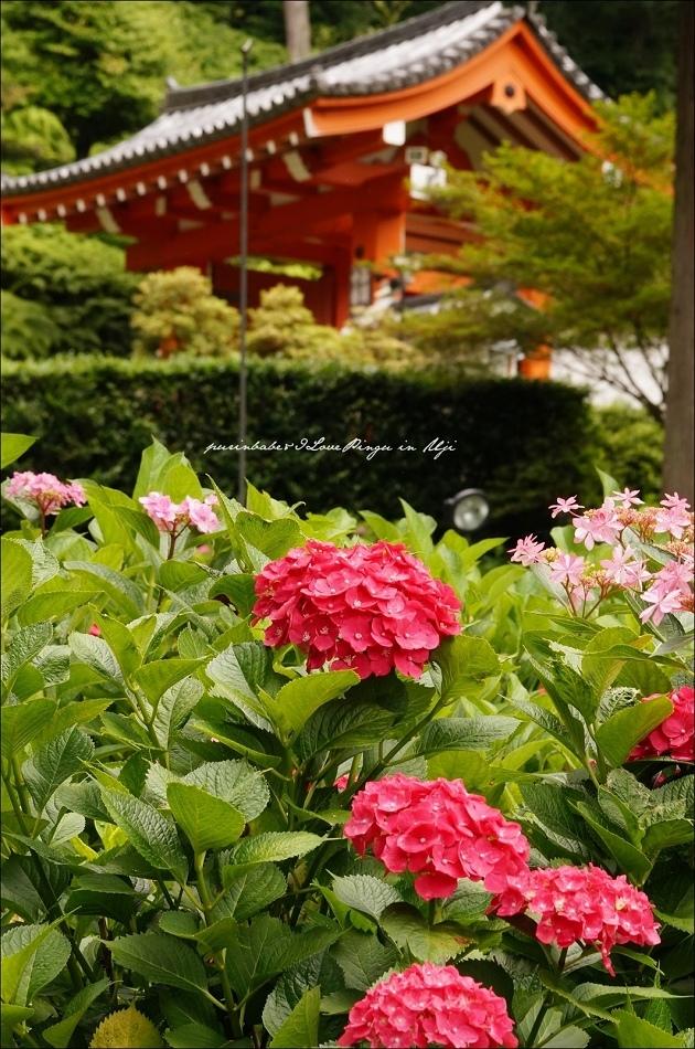 20山門與紫陽花5