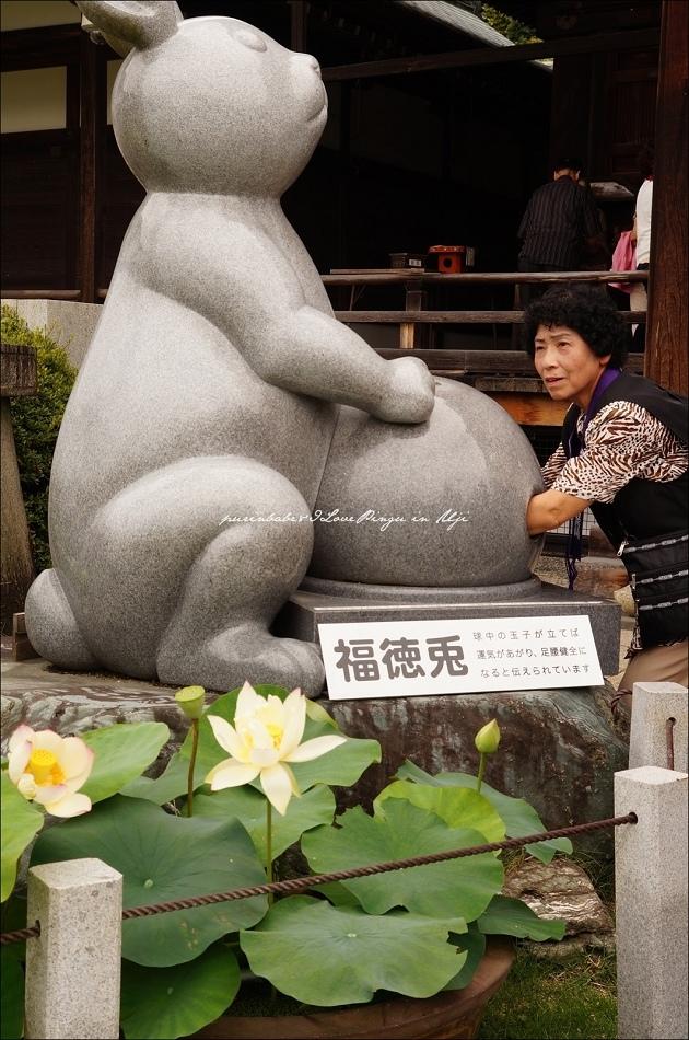 39福德兔