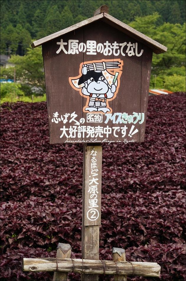 11紫蘇田2