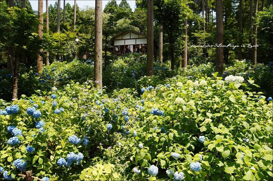 26花園3