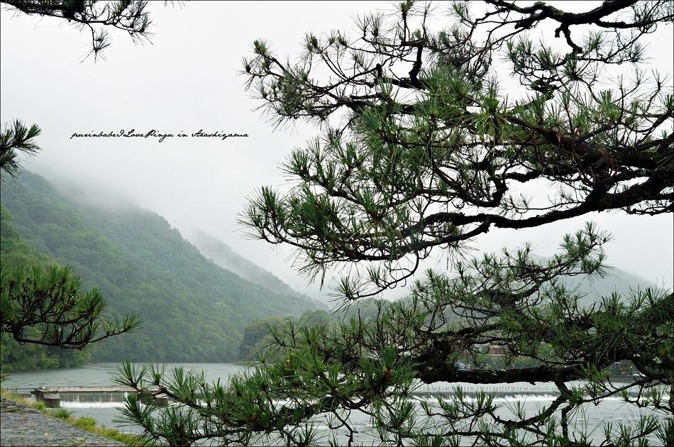 5山嵐嵐山4