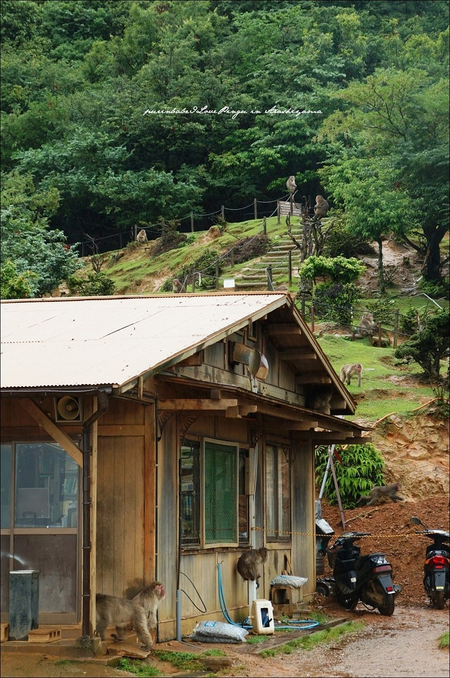 15嵐山猴子公園全景2