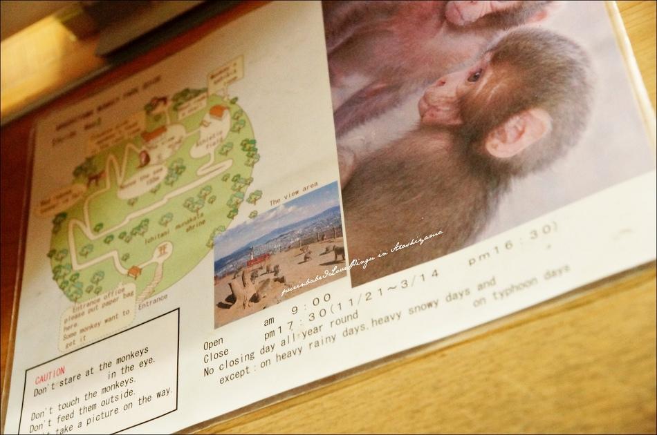 9嵐山猴子公園介紹