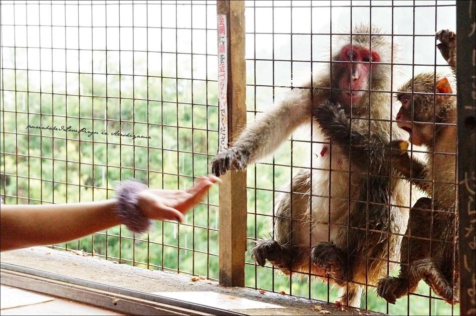 31鐵網猴1