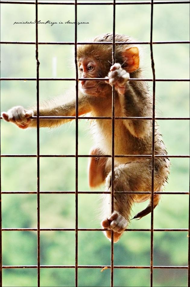 35鐵網小猴2