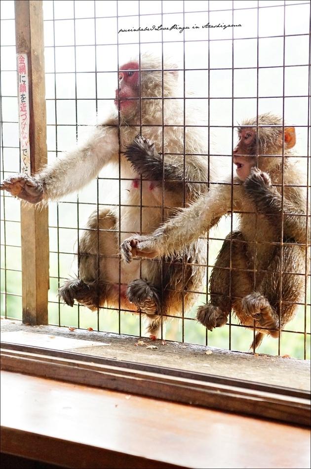 32鐵網猴2