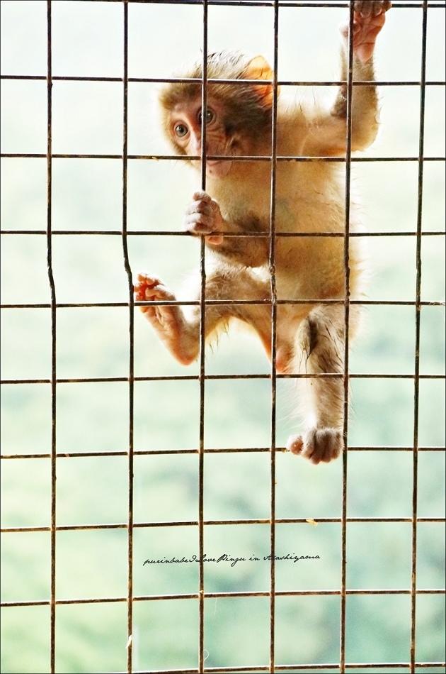 34鐵網小猴1