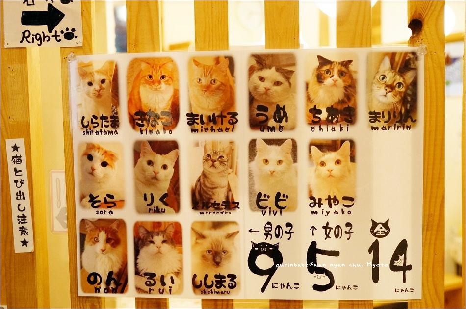 7貓咪成員