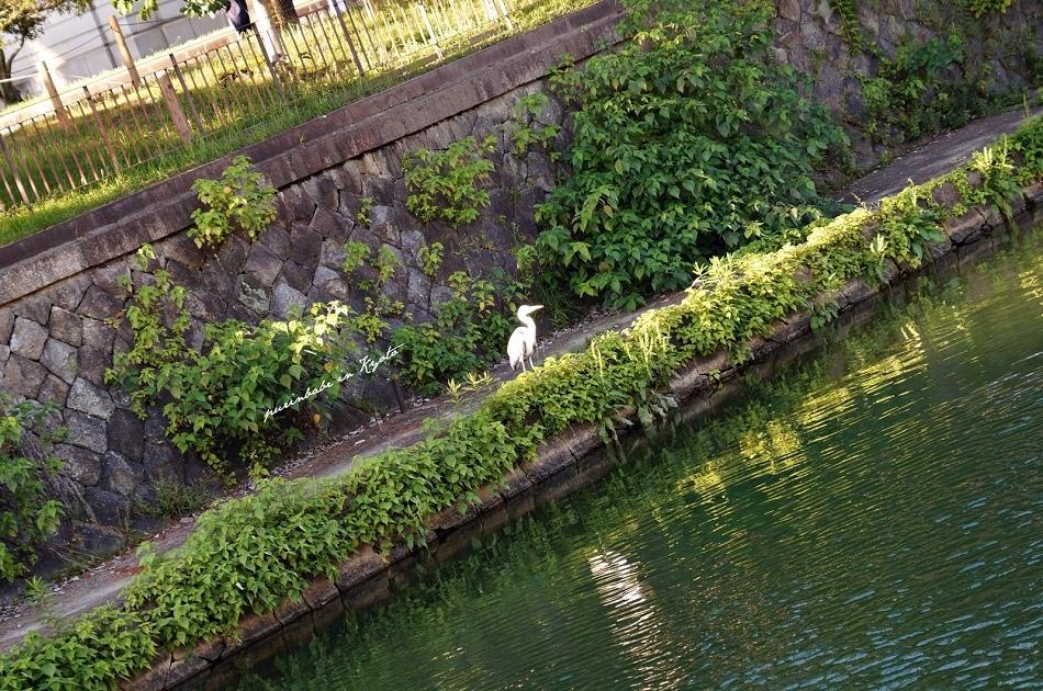 5鴨東運河2