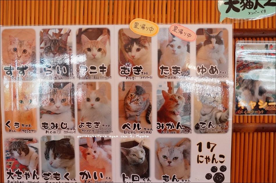 14貓咪成員
