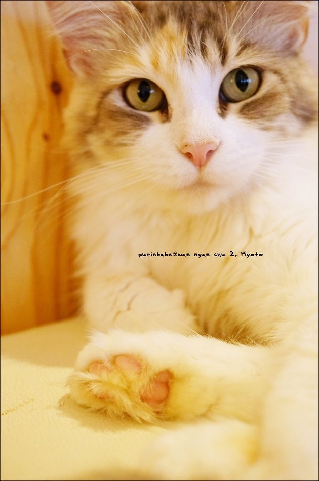 19貓公主1