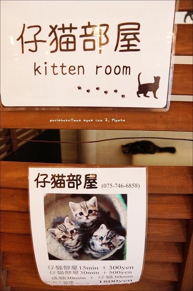 10仔貓部屋1