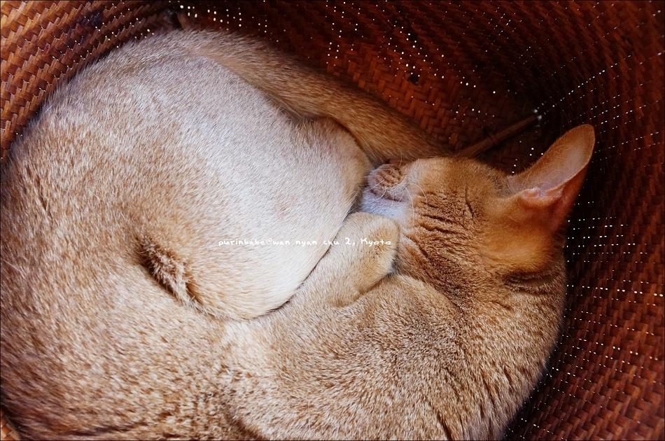 26竹編貓