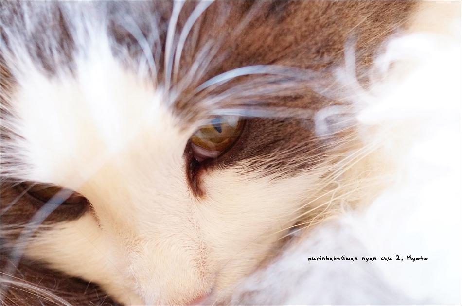 28史艷文貓