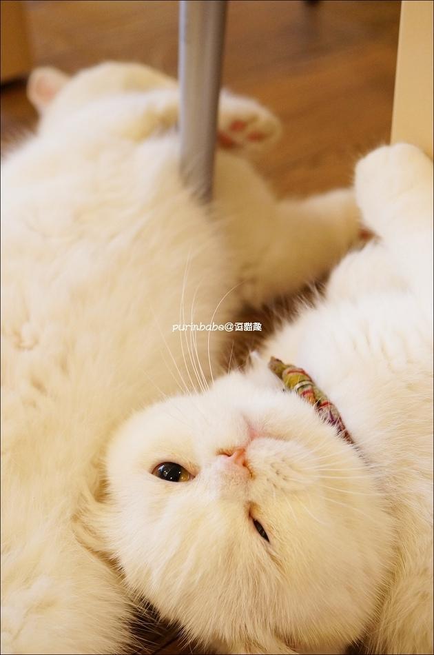 25貓咪們2