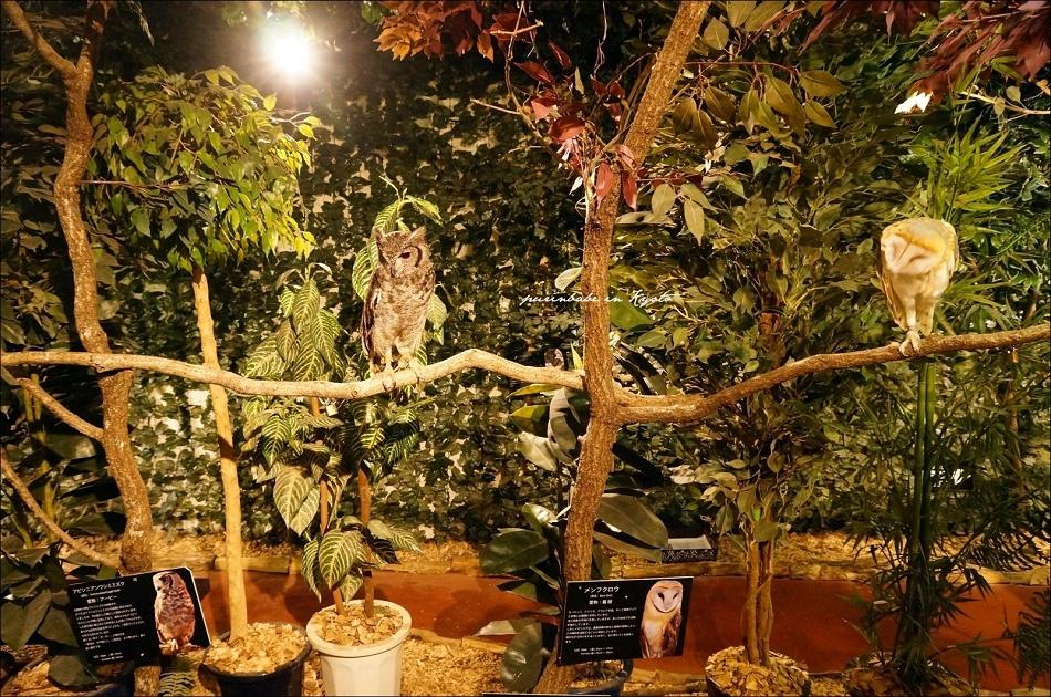15京都貓頭鷹森林