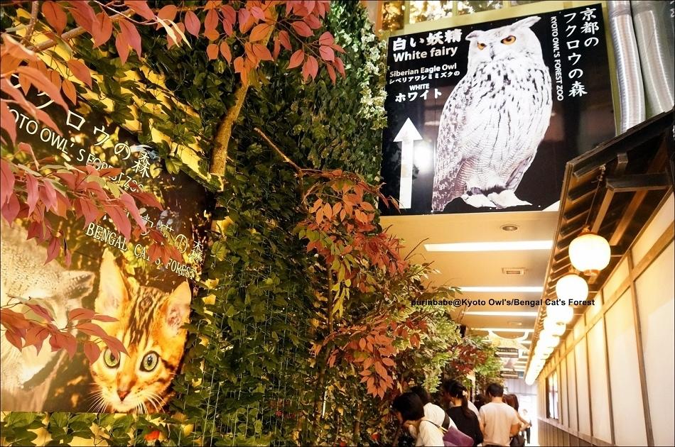 3京都貓頭鷹豹貓森林2