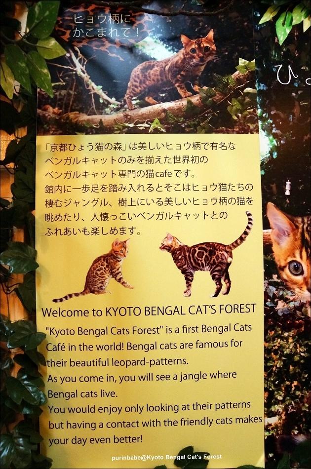 30京都豹貓森林介紹