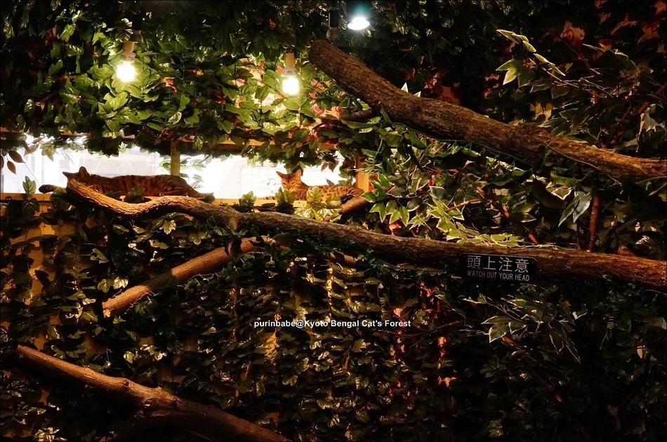 33京都豹貓森林內部空間3