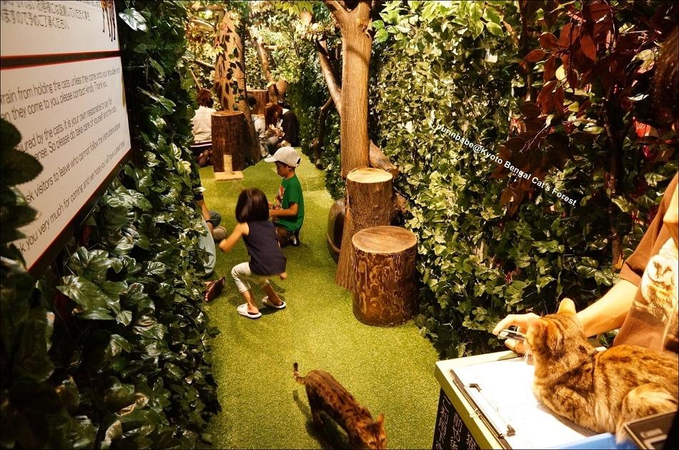 31京都豹貓森林內部空間1