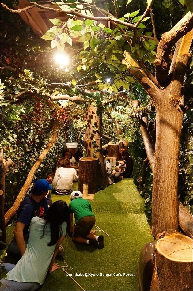 32京都豹貓森林內部空間2