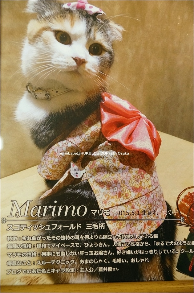 13Marimo介紹