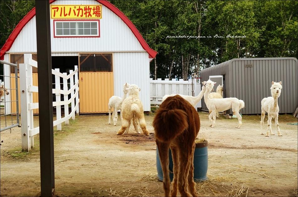 21羊駝牧場