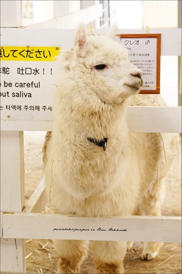 25可愛羊駝1