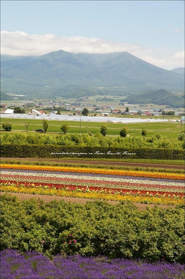 16富田農場2