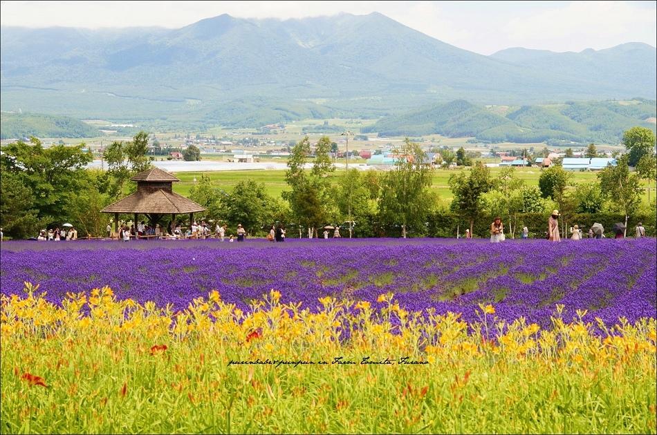 17富田農場3