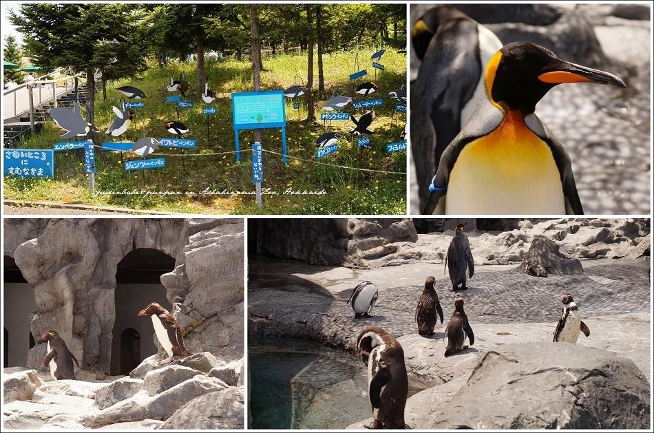 15企鵝館戶外區1