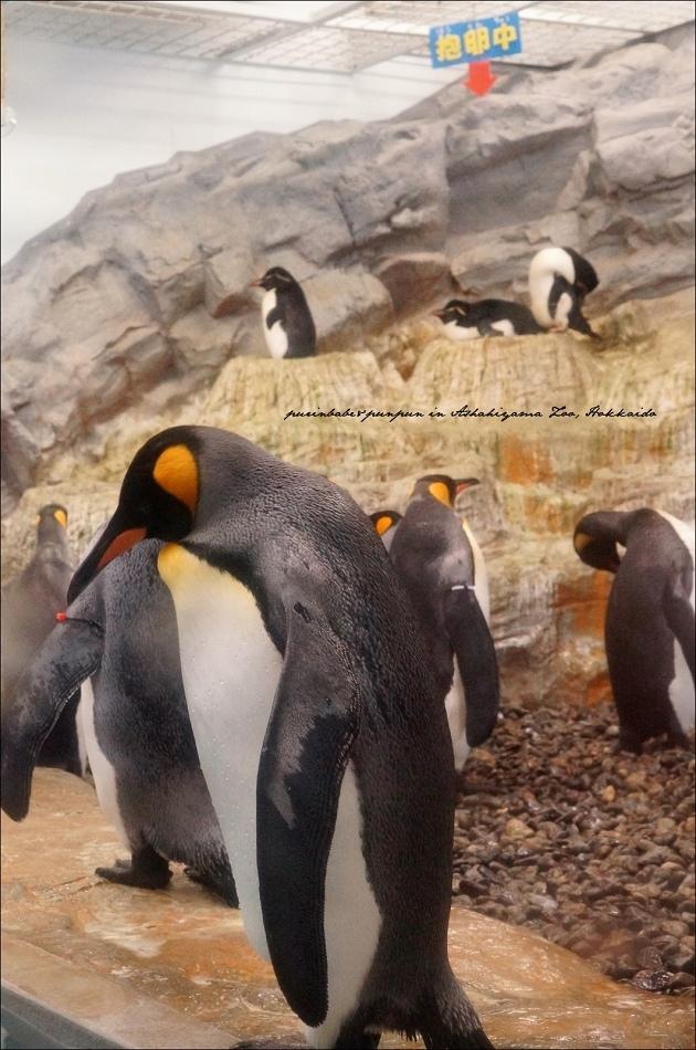 13企鵝館2