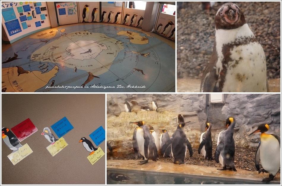 14企鵝館3