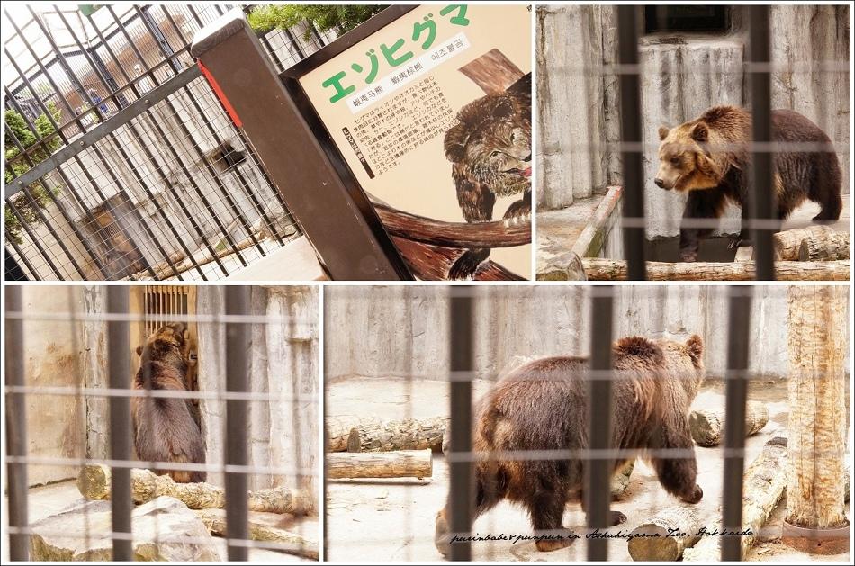 41蝦夷棕熊