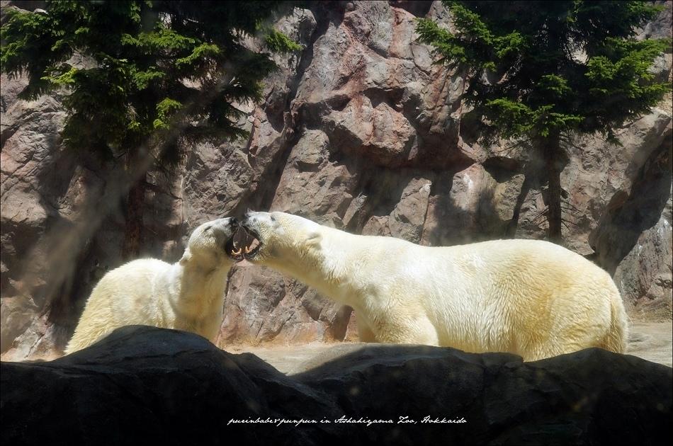 23北極熊館3