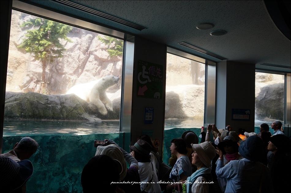 22北極熊館2