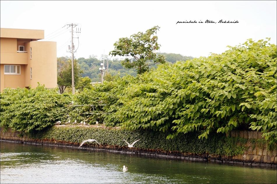 20海貓與小樽運河1