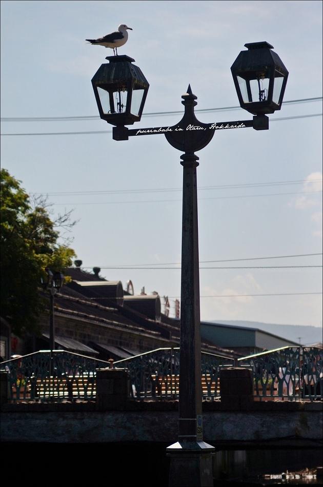 21海貓與小樽運河2